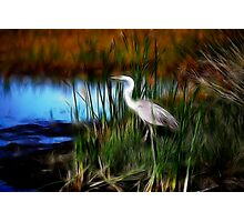 fractalius marsh-Lake Woodruff NWR Photographic Print