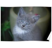 Baby Kittens Face Poster