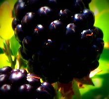 picking blackberries by leapdaybride