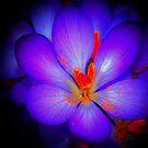 Purple Beauty by WienArtist