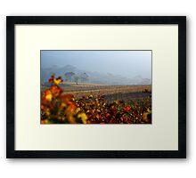 Autumn Vineyard haze Cape Town Framed Print