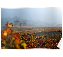 Autumn Vineyard haze Cape Town Poster