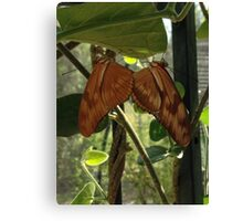 Twin Butterflies Canvas Print