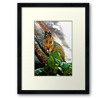 Haughty  (Bryant's fox squirrel) Framed Print