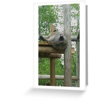 A baboon's point of view Greeting Card
