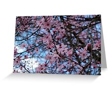Sakura Blossoms Greeting Card