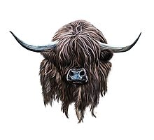 Scottish 'Heilan Coo' by brodyquixote