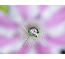 Clematis in a drop Photographic Print