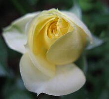 Lemon Ice Rose by MarianBendeth