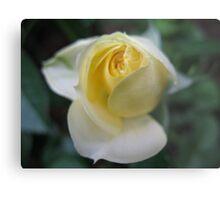 Lemon Ice Rose Metal Print