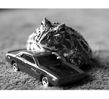 Fast and the  Frogious Photographic Print