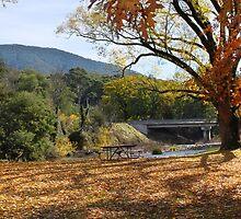 'Autumn leaves' - Jamieson, Victoria, Australia by Linda Karman