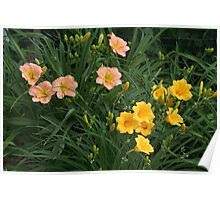 The Daylily Patch Poster