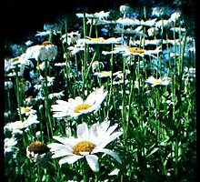 Field of flowers TTV by CTPhotography