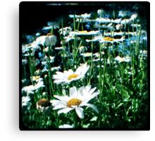 Field of flowers TTV Canvas Print
