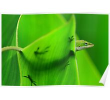 Anole Silhouette  Poster