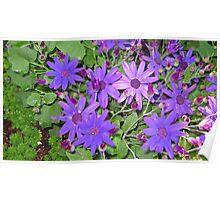 Purple Daisies Poster