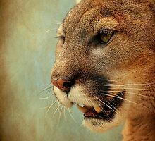 Mountain Lion by SteveMcKinzie