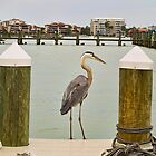My Great Blue Heron Friend by Memaa