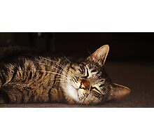 Soft Kitty, Warm Kitty Photographic Print