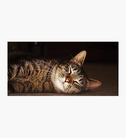Soft Kitty, Warm Kitty Photographic Print