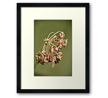 When beauty takes on a different form... Framed Print