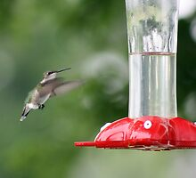 Precious Little Flying Jewel. by SStreet