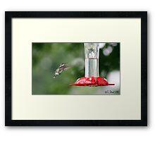 Precious Little Flying Jewel. Framed Print