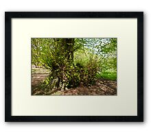 New growth on Tree base Framed Print