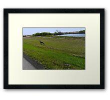 Mule Deer racing The Truck Framed Print