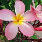 Frangipani blush by Akrotiri