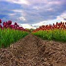 Vibrant tulip field by Lindie Allen