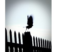 Blurred Bird Photographic Print