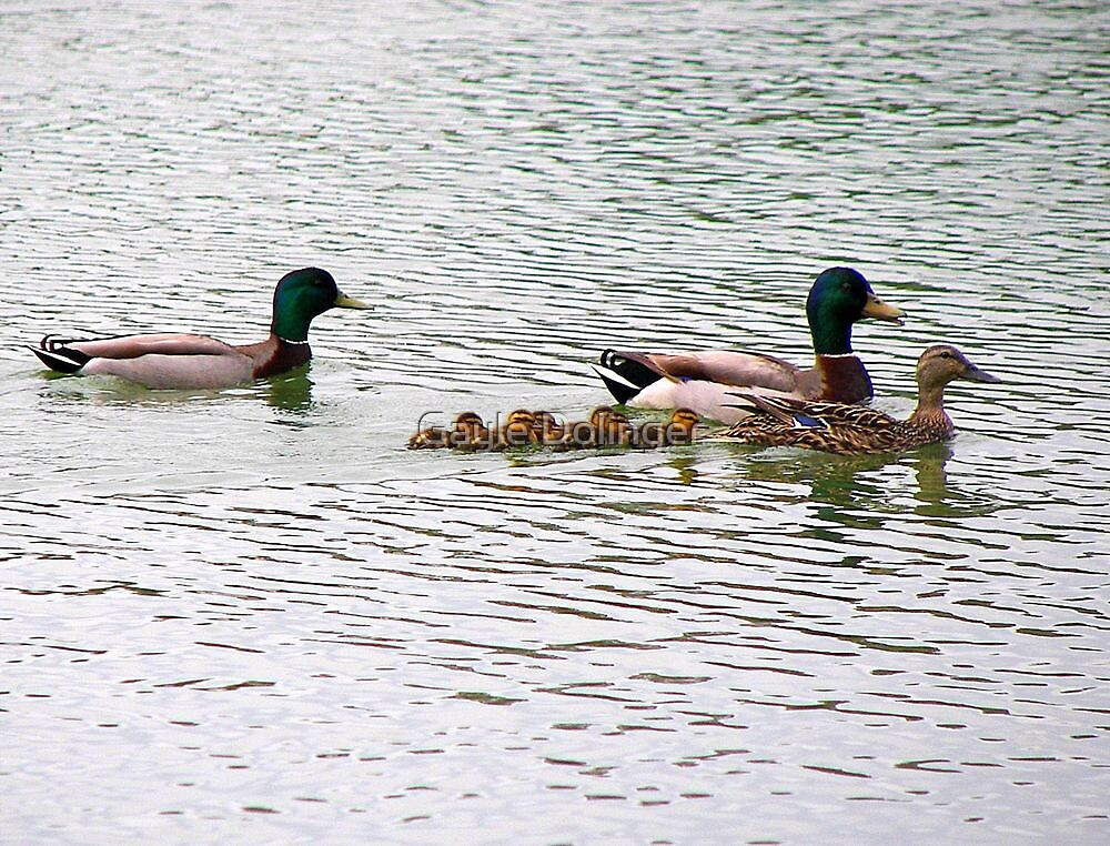 Duck Day Afternoon by Gayle Dolinger