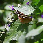 Butterfly on Leaf by Caren
