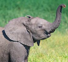 Elephant Calf Greeting by Owed To Nature