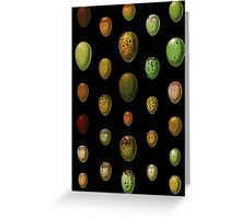 Lovely colorful wild egg collection Greeting Card