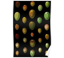 Lovely colorful wild egg collection Poster