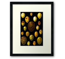 Lovely colorful wild egg collection Framed Print