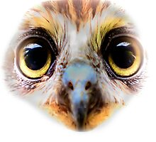 Eyes of a BooBook Owl by Dave  Knowles