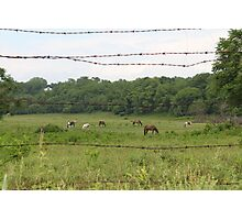 Barbed Wire and Beauty Photographic Print