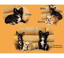 Oreo, Nike and Sasha Photographic Print