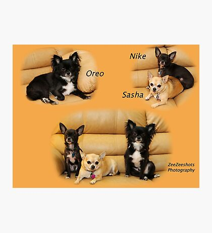 Oreo, Nike and Sasha Photographic Print