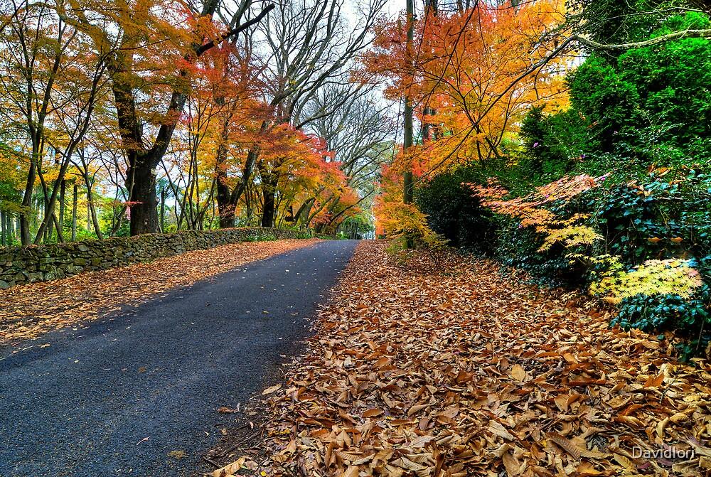 Autumn | Mt Mount Wilson | NSW | Blue Mountains | Australia | HDR by DavidIori