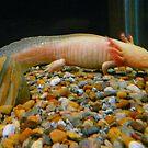 Legged Pink Fish (Salamander) by MaeBelle