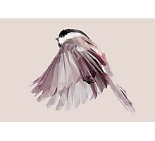 Lowpoly Bird in Flight Photographic Print