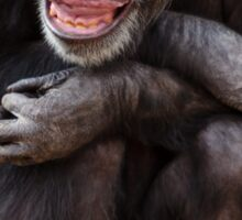 Chimpanzee chuckle Sticker