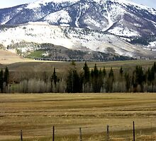 Colorado Pastures by rwhitney22