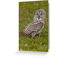 Great Grey Owl on the ground Greeting Card