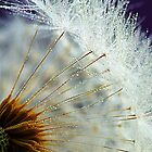 Dandelion seed by Hetty Mellink